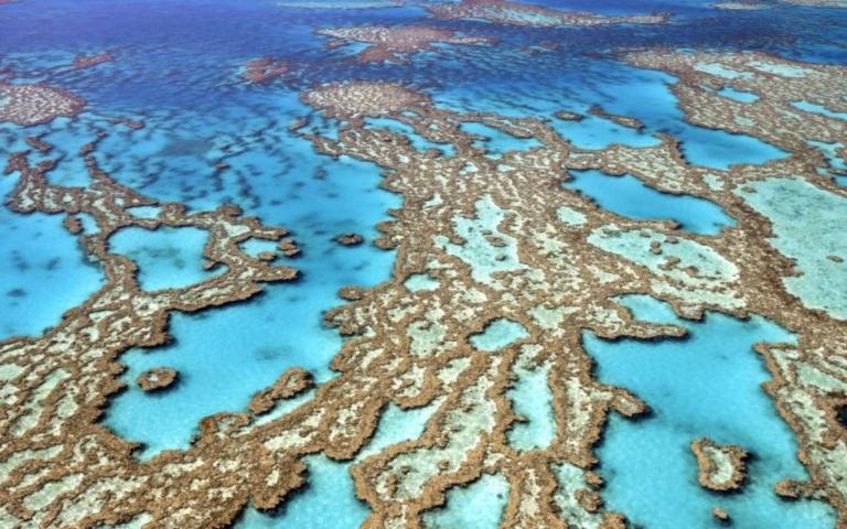 Вымирание коралловых рифов