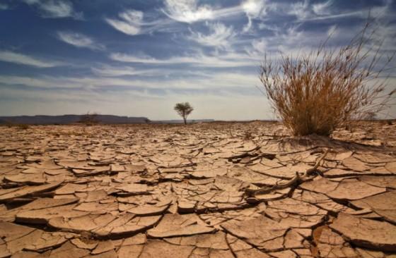 Шестое вымирание на планете уже началось