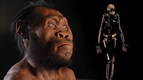 Новый вид человека: Homo naledi