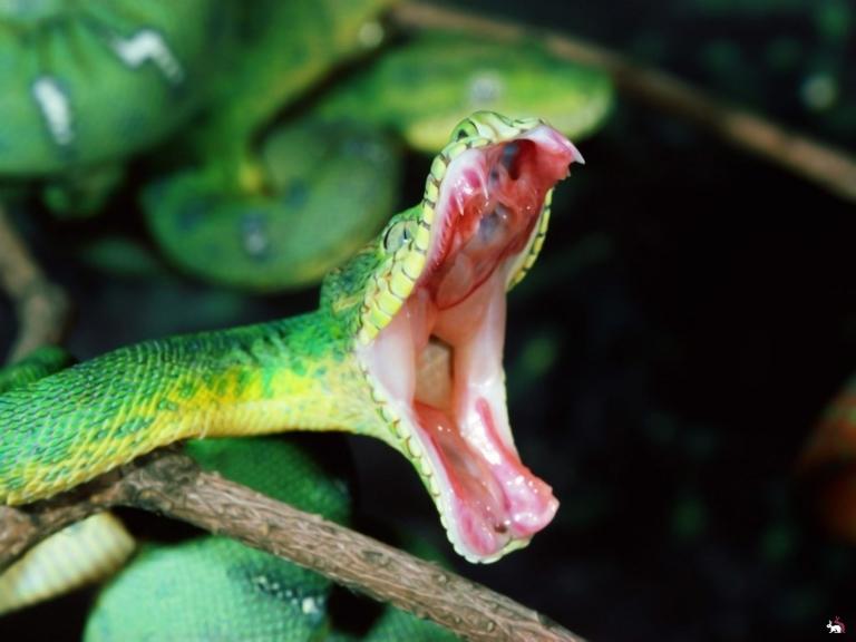 Видео с пожирающей саму себя змеей вызвало дискуссию в интернете
