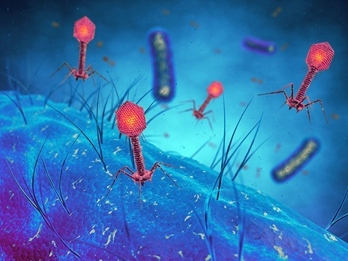 Вирусы против бактерий