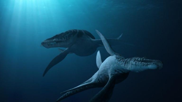 Плезиозавр — длинношеее морское чудовище