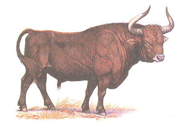 Животное тур (первобытный бык)