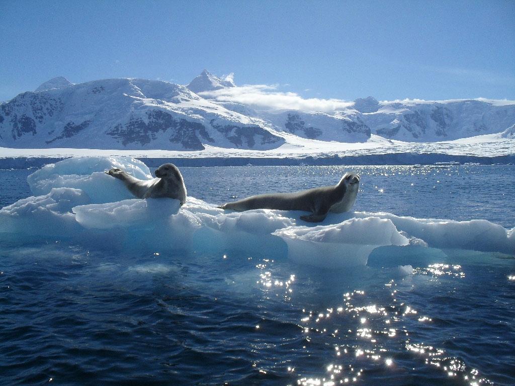 Воды Южного океана