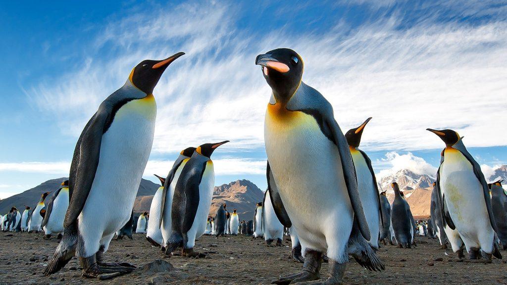 Пингвины в Арктике