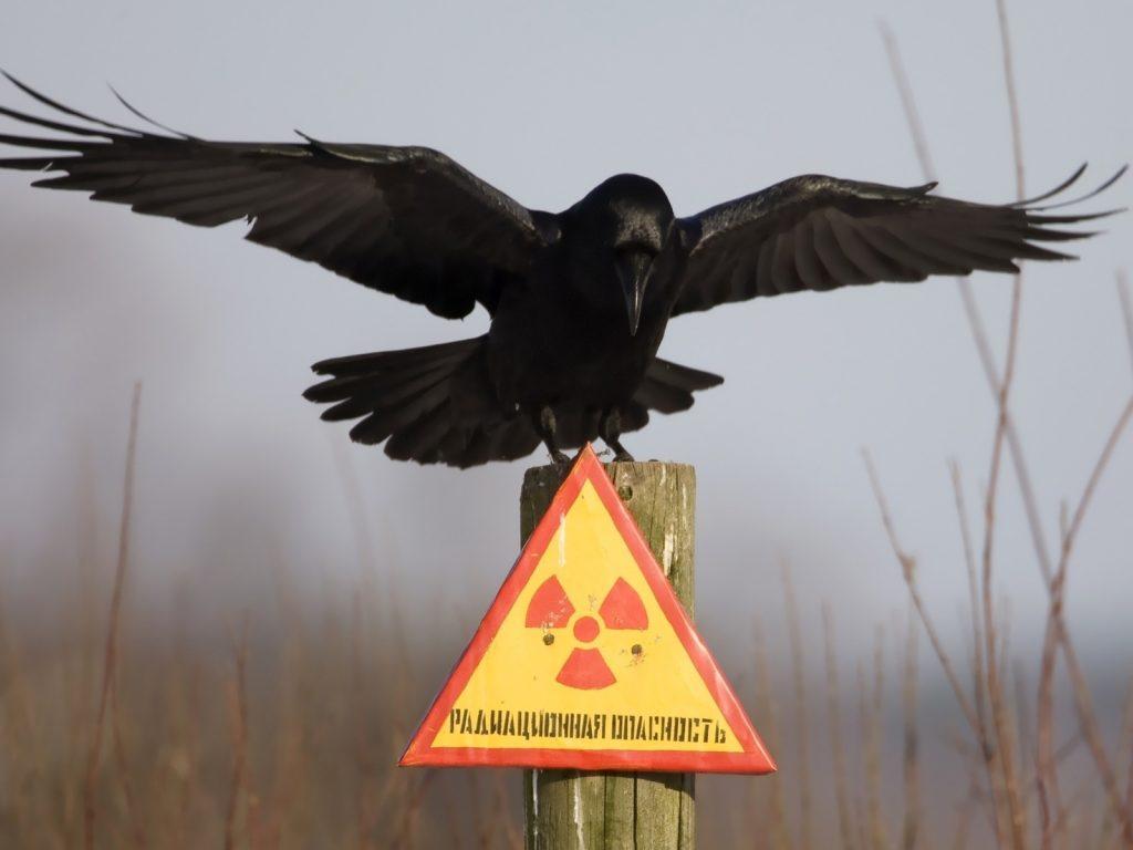 Радиоактивные заповедники