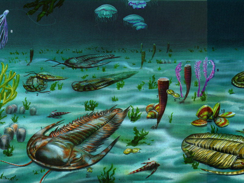 Животные кембрийского периода