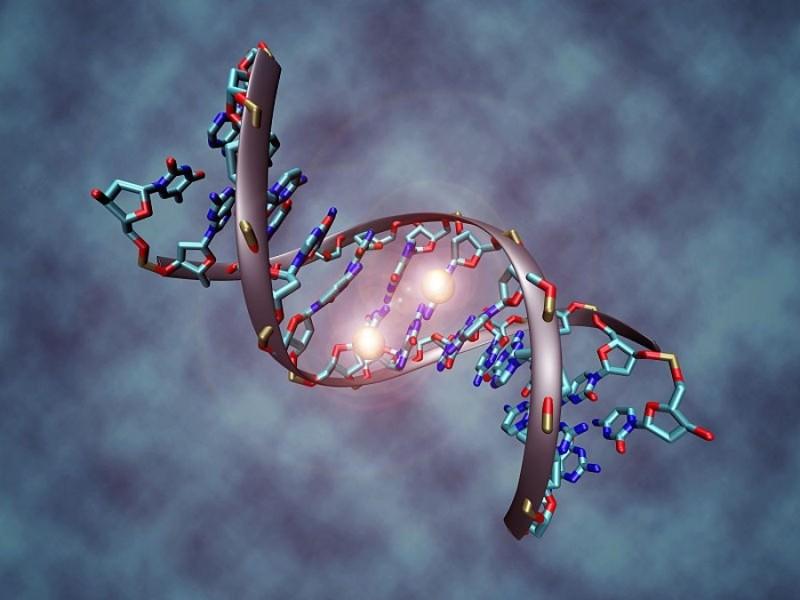 Как расшифровывается ДНК