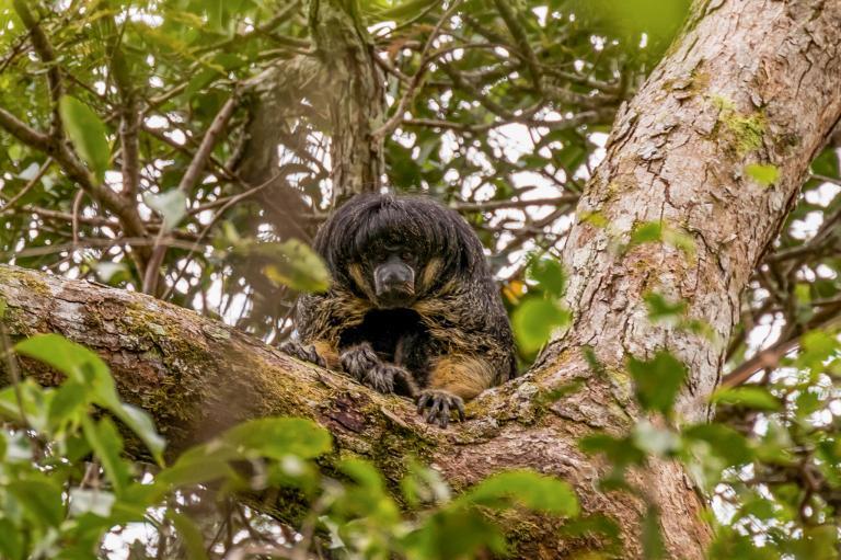 В лесах Амазонки найдено неизвестное животное