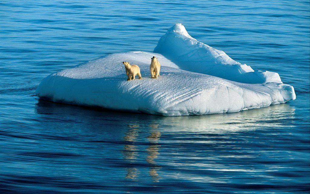 Влияние изменения климата на живых существ