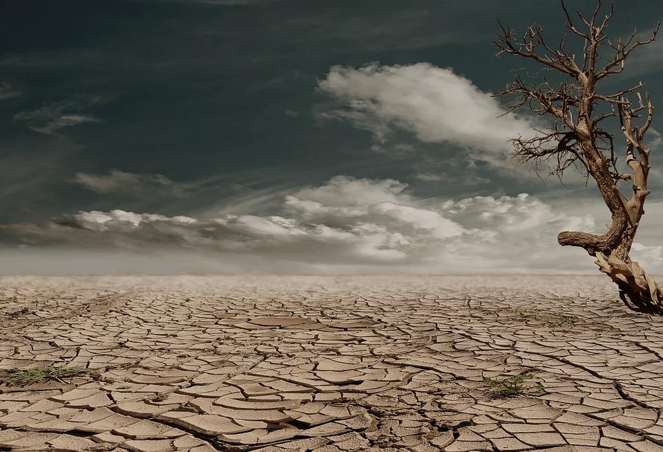 Жизнь животных и растений без воды