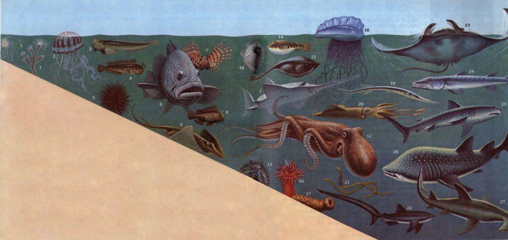 Жизнь водных животных