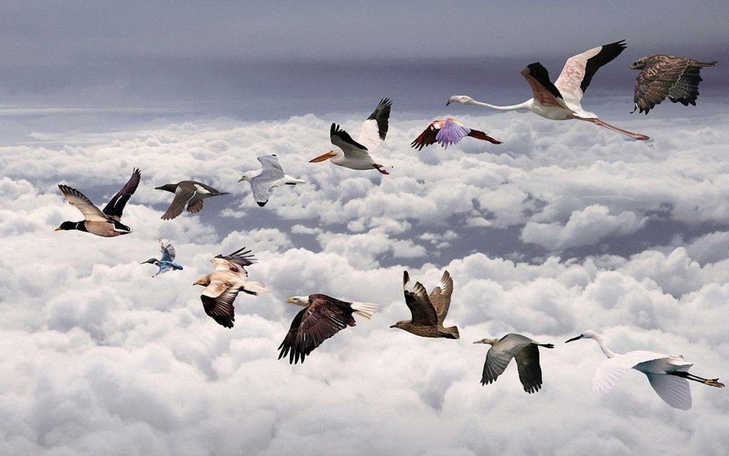 Сезонные перелеты птиц