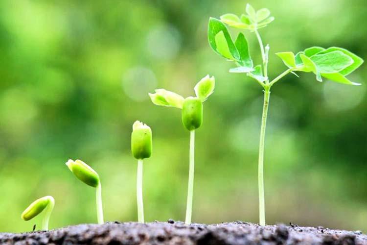Рост растений