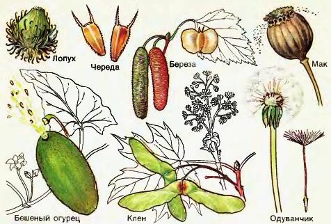 Расселение растений по Планете