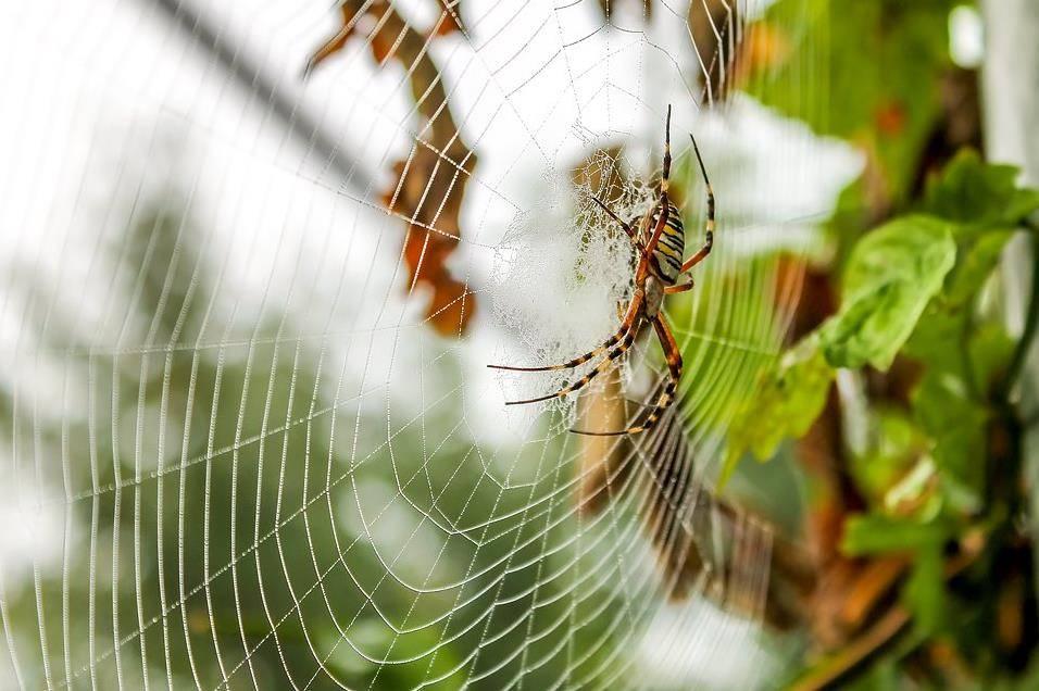 Как пауки используют паутину