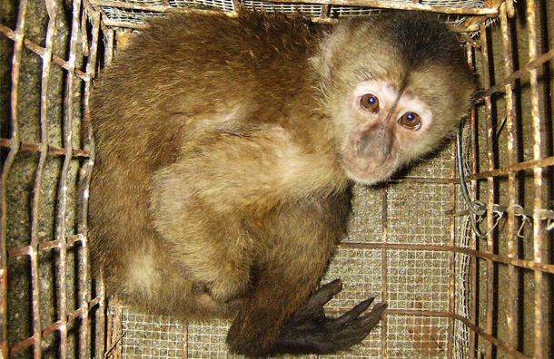 Торговля дикими животными становится главным фактором оскудения природных экосистем