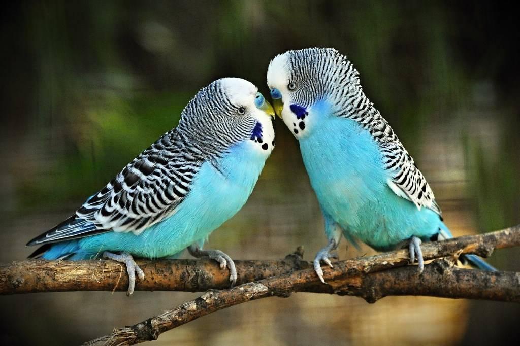 Попугаи самые умные птицы