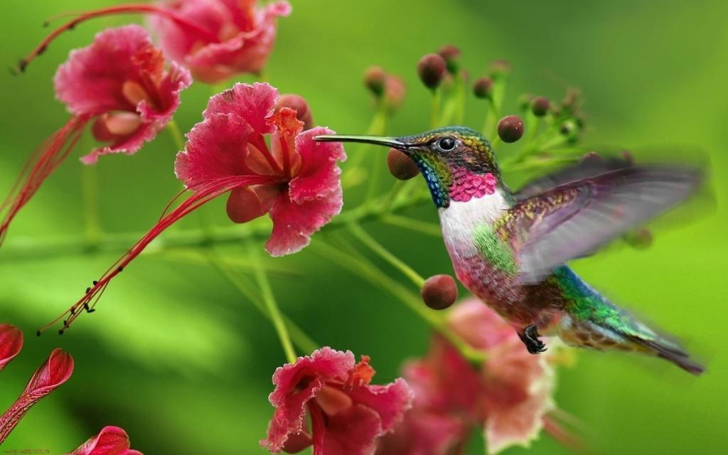Цветковые растения и опылители
