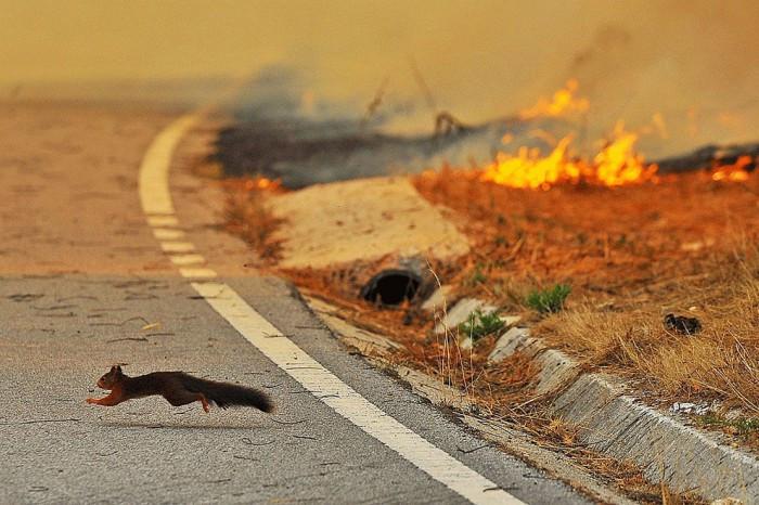 Кто поджигает леса?