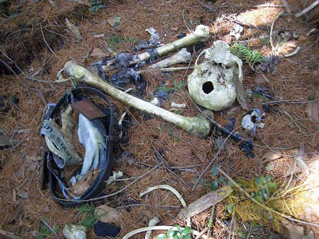 Паломничество самоубийц в лес Аокигахары