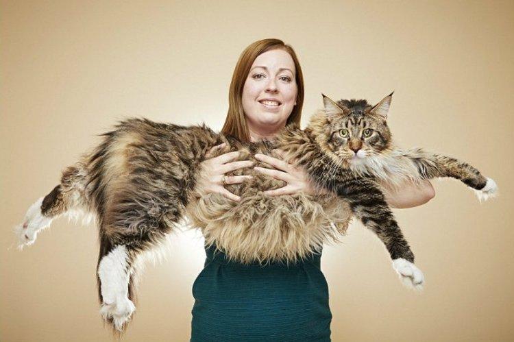 Самая длинная кошка живет в Британии