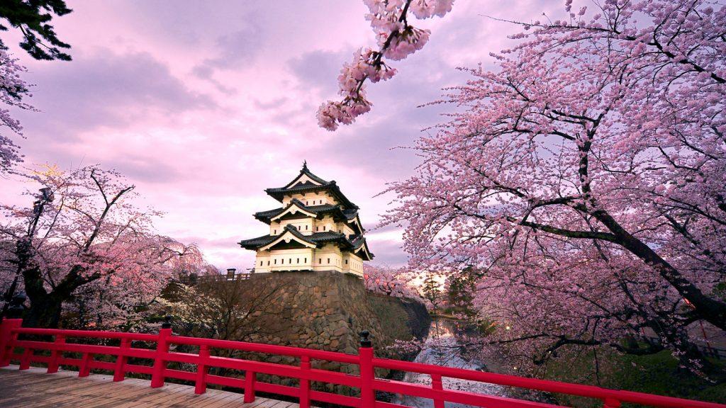 Главное дерево Японии