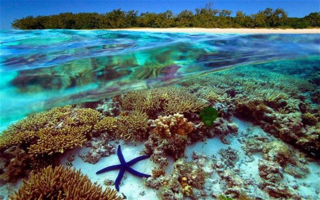 Вымирание кораллов. Можно ли спасти коралловые рифы?