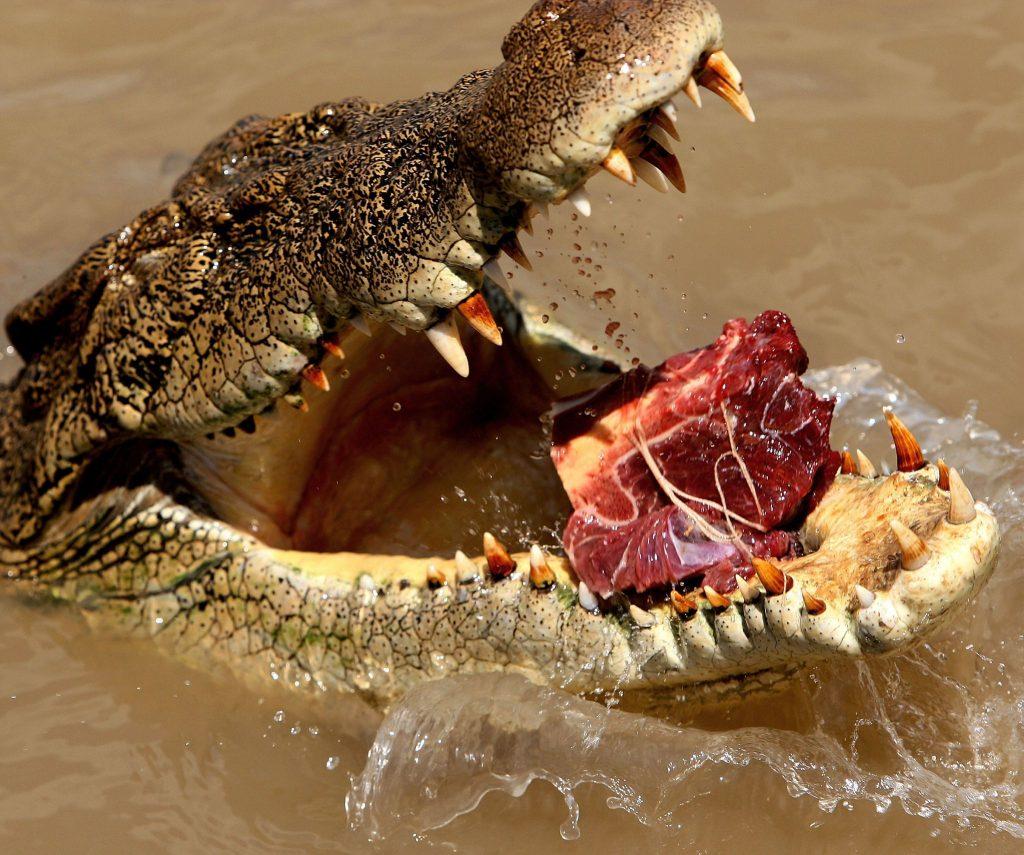 Отомстили крокодилу-людоеду