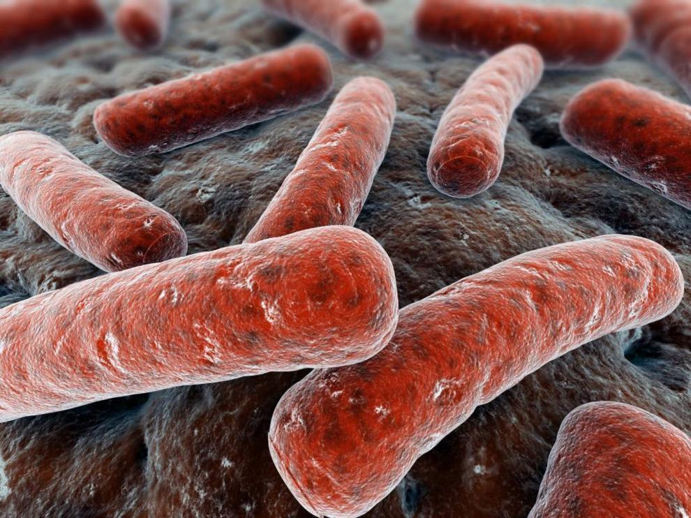 Плотоядная бактерия атакует Австралию