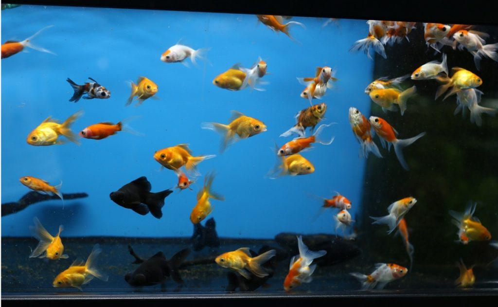 Особенности содержания рыбок