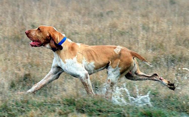 Пси-трейлинг: как домашние животные возвращаются к хозяину за тысячи километров