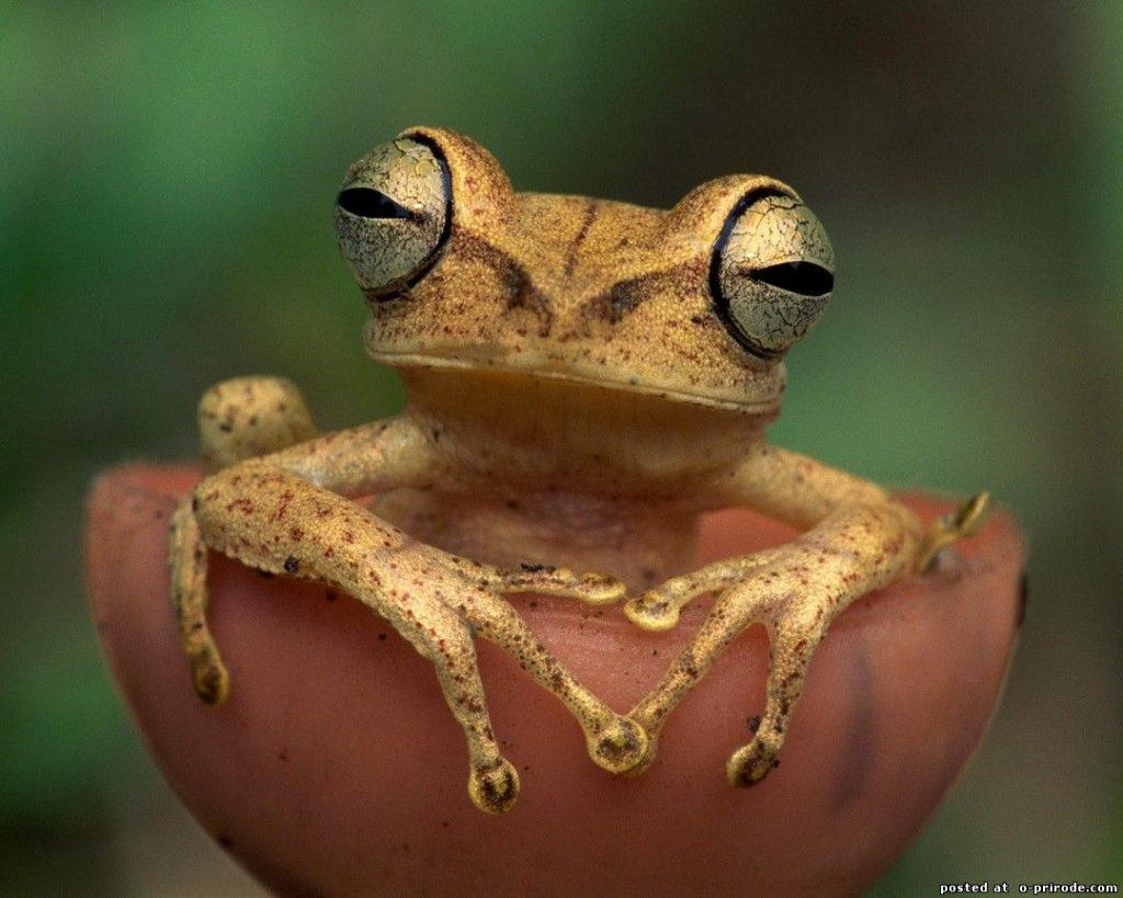 Лягушка с золотыми глазами