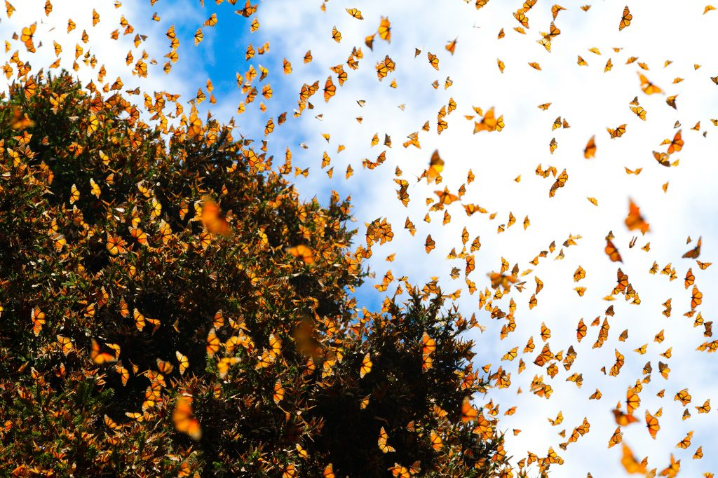 Миграция насекомых