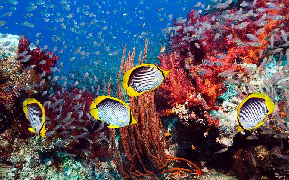 Морская фауна скоро исчезнет