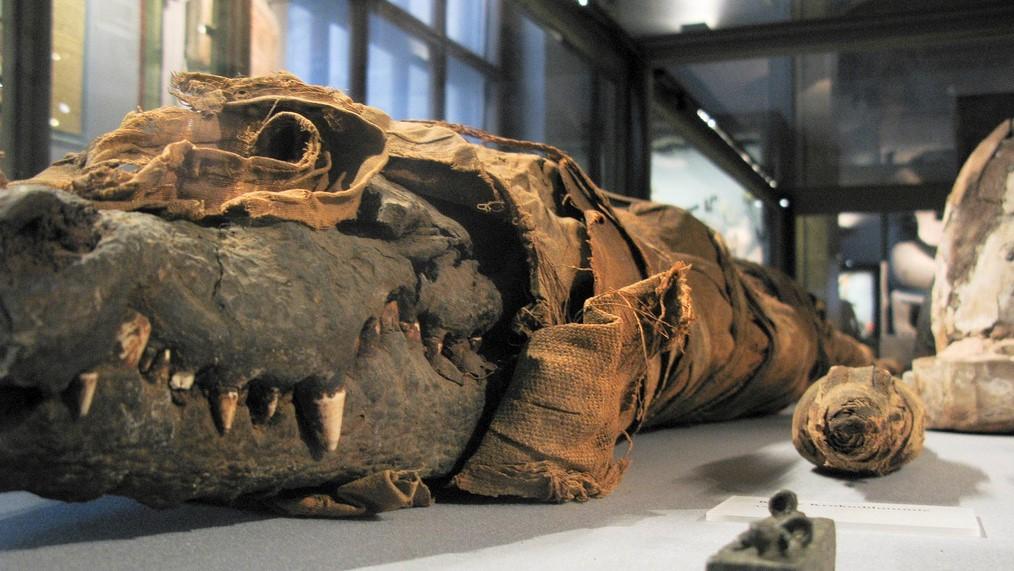 Мумия принцессы - крокодила