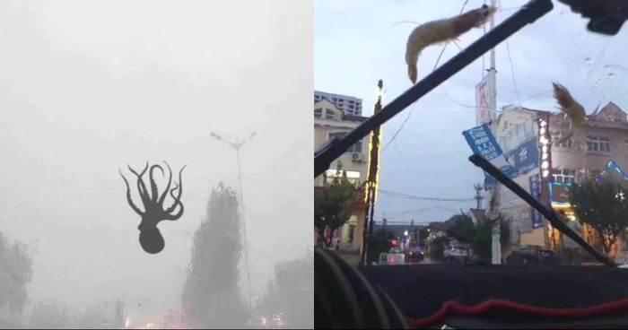Дождь из осминогов и креветок