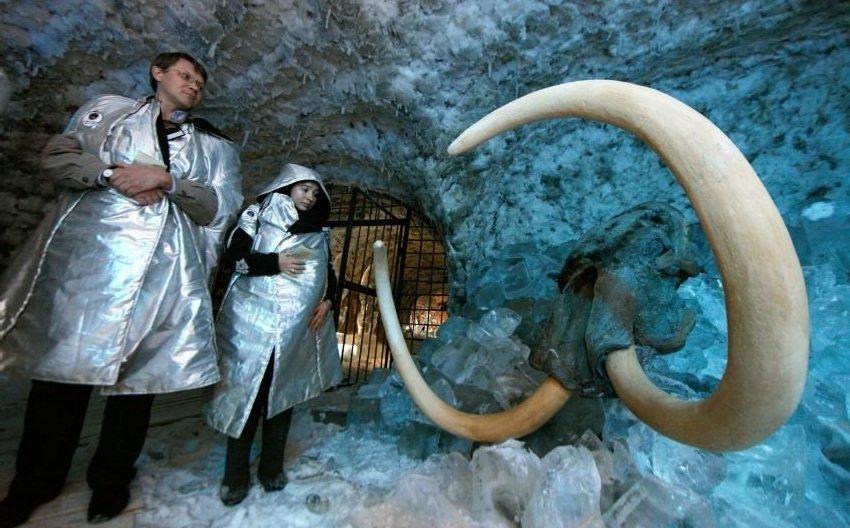 Центр по клонированию мамонтов построят в Якутии