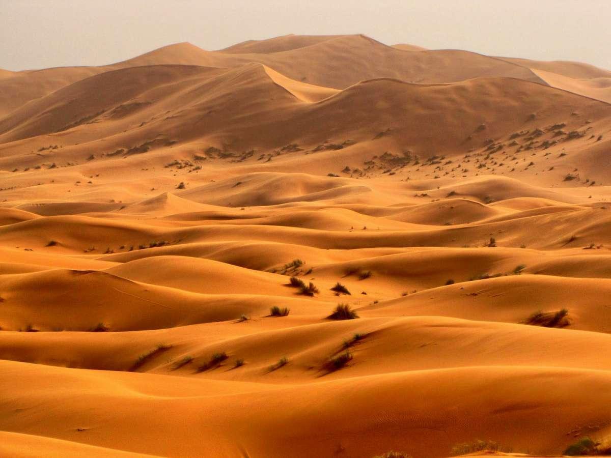 Пустыни: физические условия среды обитания