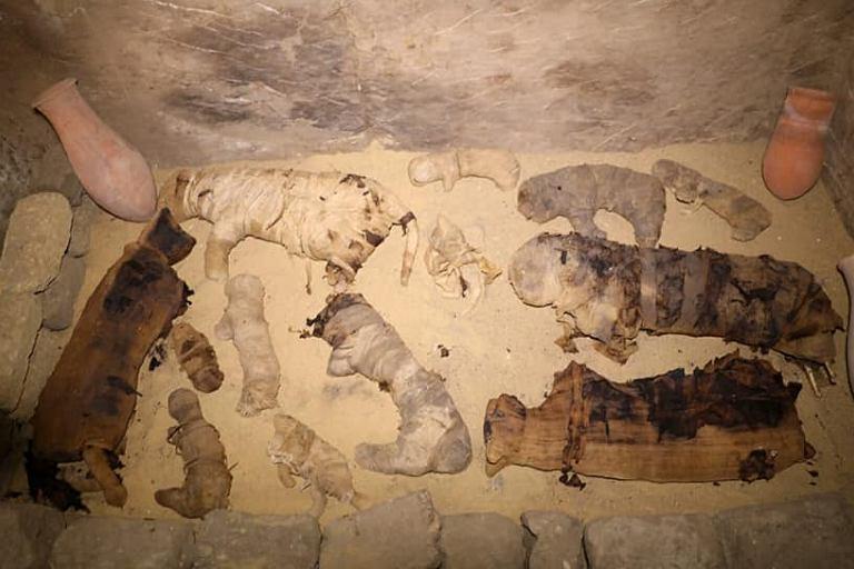 Мумии кошек и скарабеев найдены в Египте