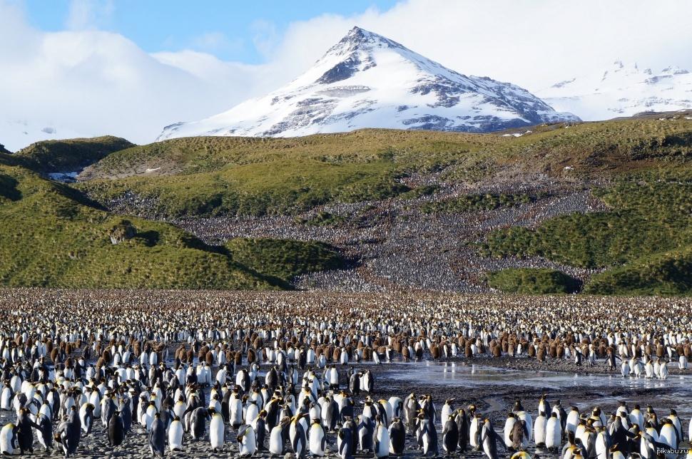 Самая старая колония пингвинов