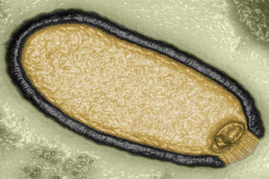 Ученые обнаружили неземные вирусы