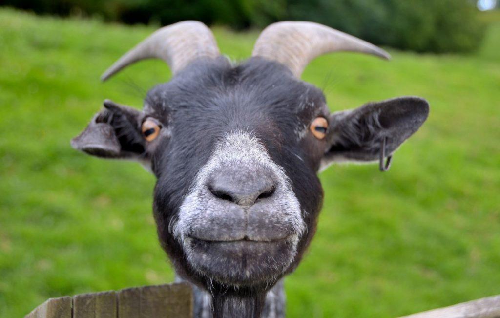 Умеют ли животные считать?