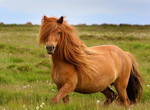 Ирландские боевые пони: археологи нашли останки вымерших животных