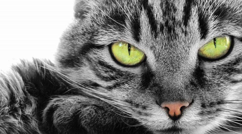 Животные с экстрасенсорными способностями - реальные истории ... f431a60e89769
