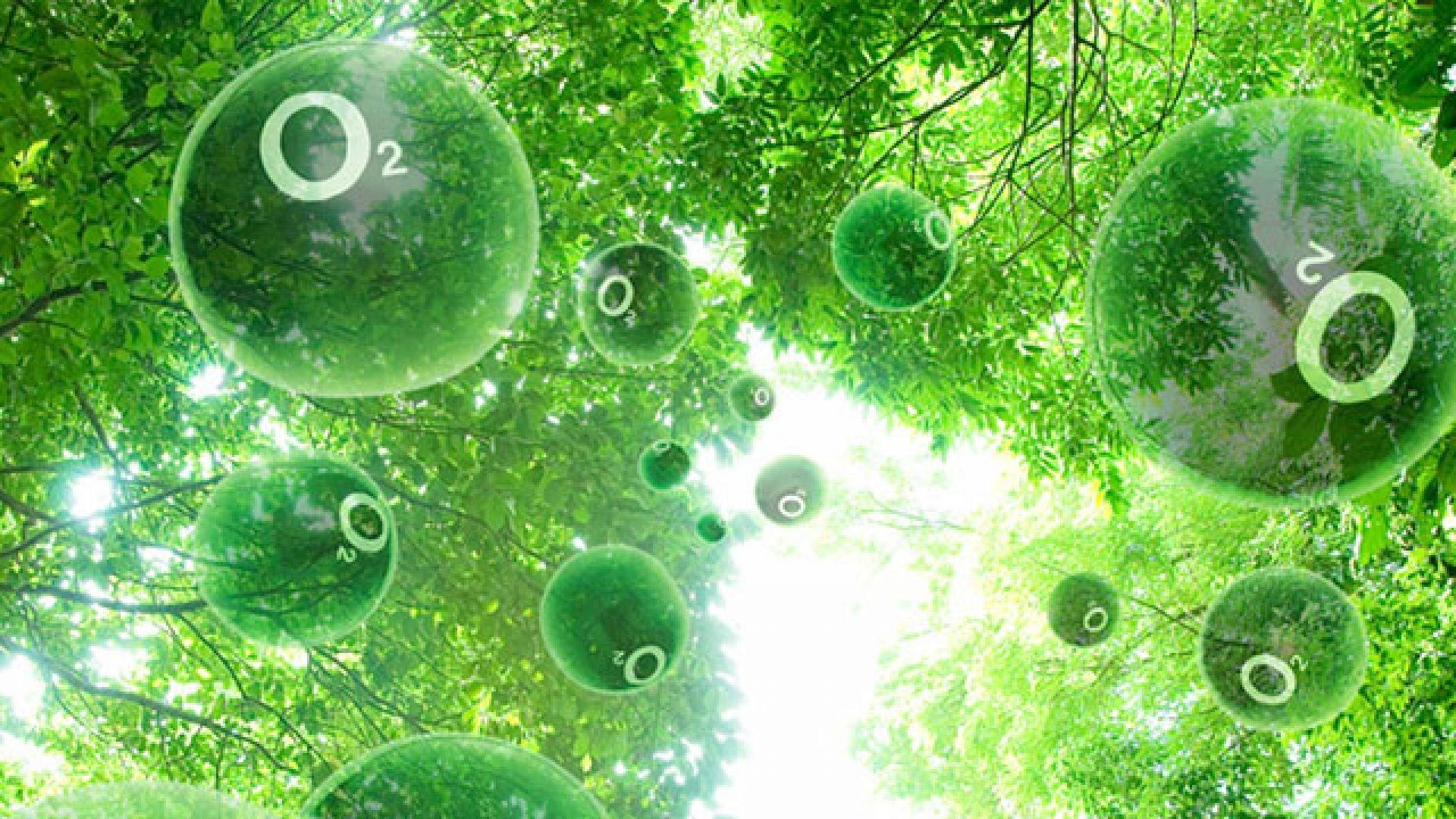 История открытия и изучения фотосинтеза