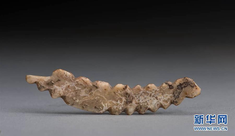 Самый древний шелкопряд
