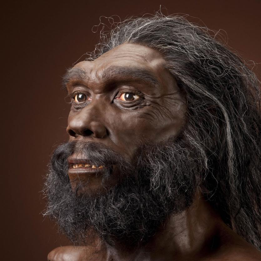 Ученые сделали вывод, что в становлении нашего вида важную роль сыграли... брови!