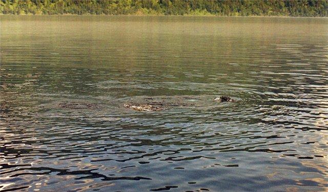 Кто живет в озере Бросно?
