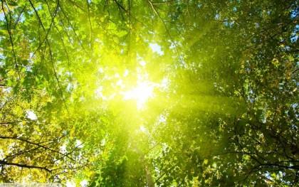 Солнечный свет и «сытое» человечество